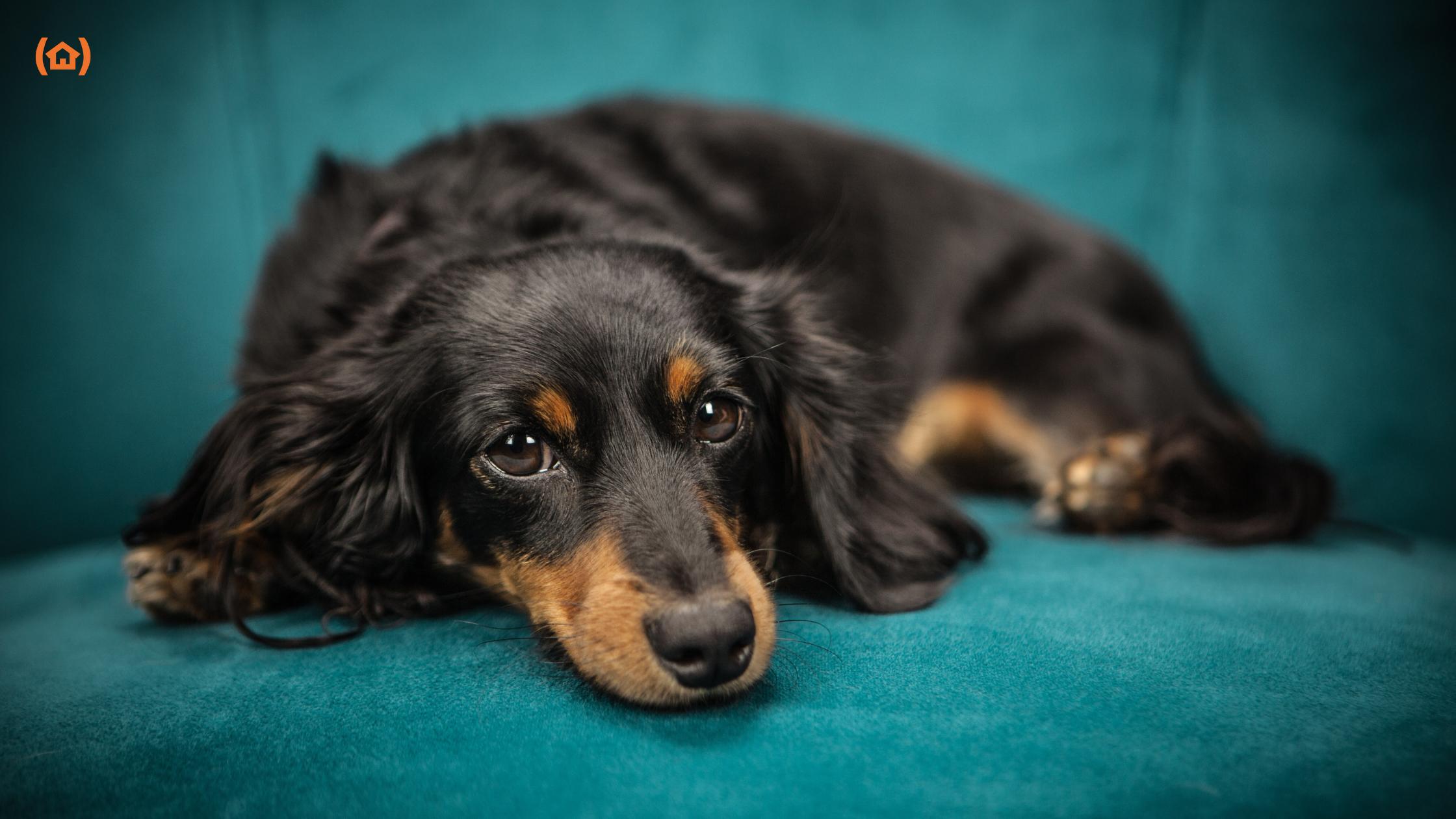 Los perros pueden ser terapéuticos para las personas. A los adultos mayores pueden aportarles grandes beneficios. Descubre cuáles son en nuestro blog.